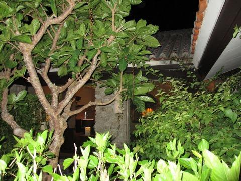 サガリバナ木夜
